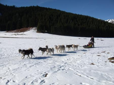 Sortie chiens de traineau 2011